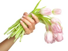 tulips in lovely hands